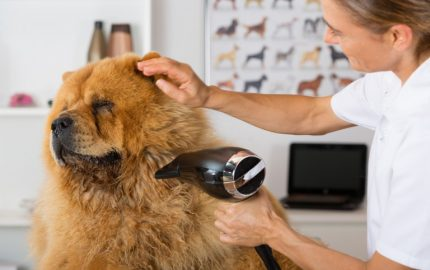 Essential Dog Grooming Tips