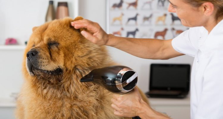 Dog Groomer Tips diy dog grooming tips tricks groom your dog at