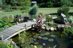 Upgrade Your Pond or Garden