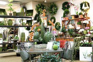 Love Silk Plants
