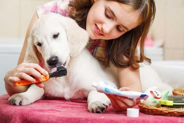 Cleaning doggie teeth