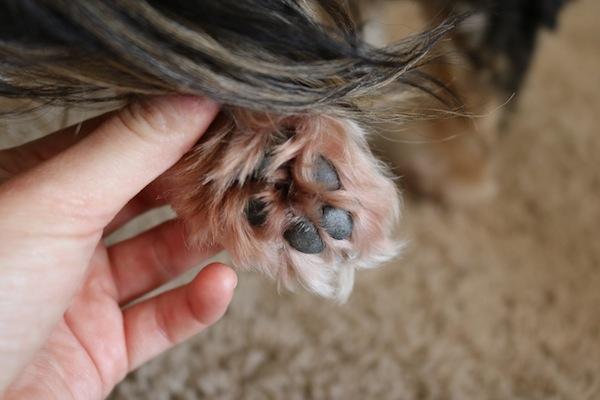 Treating doggie allergies